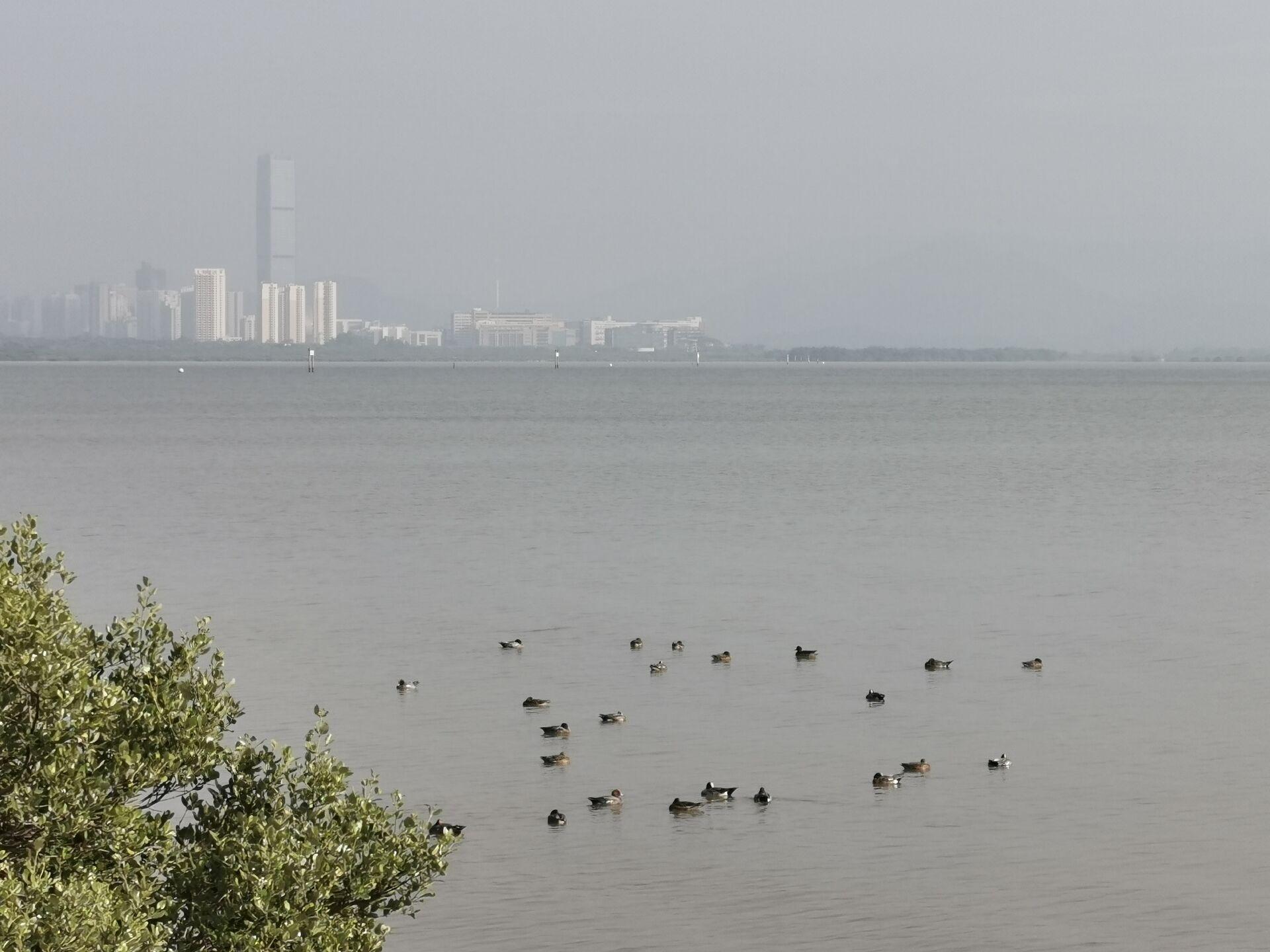 深圳湾海鸟8.jpg