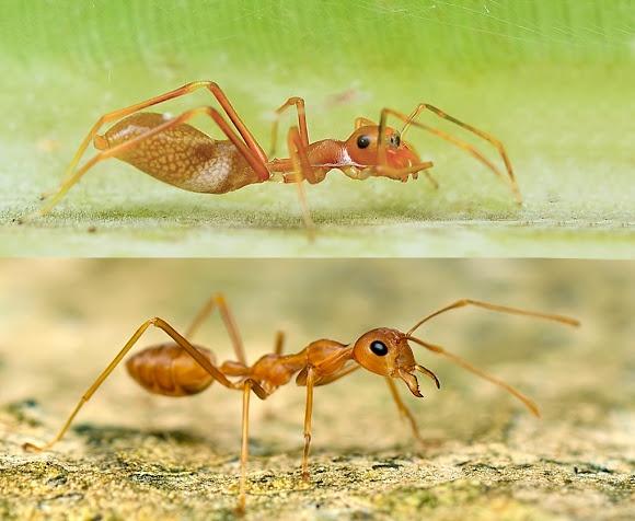 ant vs spider. taken from projectnoah.org.jpg