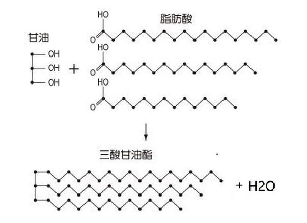 脂肪酸1.jpg