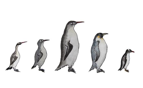 JPG格式草图-企鹅的进化 拷贝.jpg