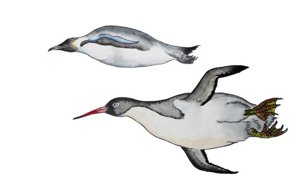 古冠企鹅属与今天帝企鹅属的体型对比.jpg