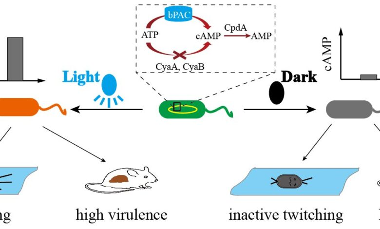 Researchers-develop-engineered-strain-to-optically-control-bacterias-movement-be.jpg