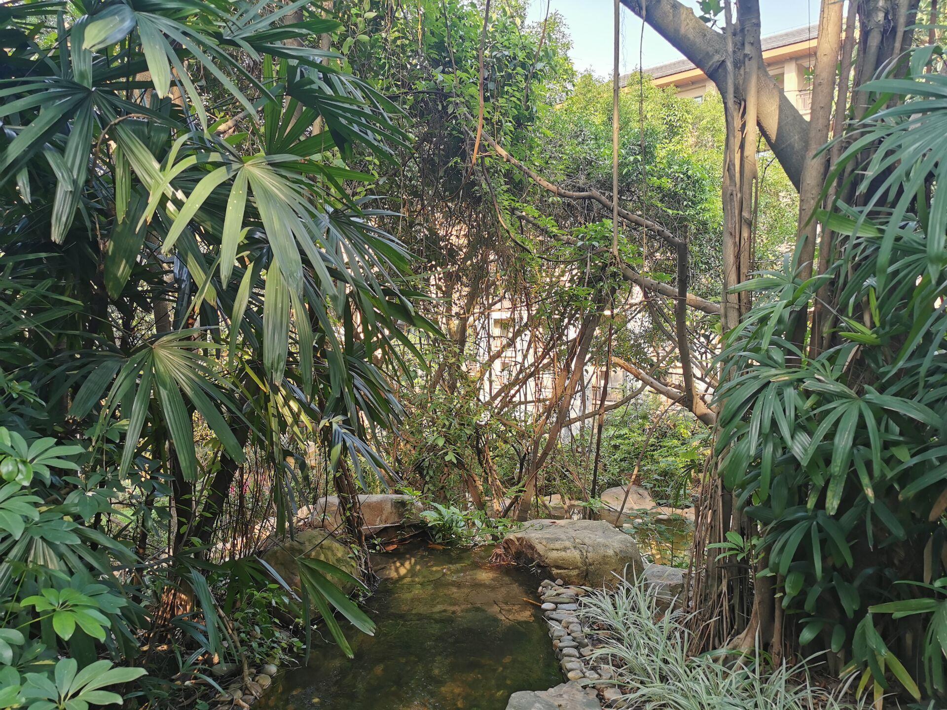 广州某宾馆庭院和周边06.jpg