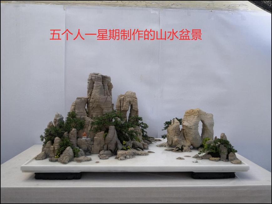 徐黎杰-盆景.jpg