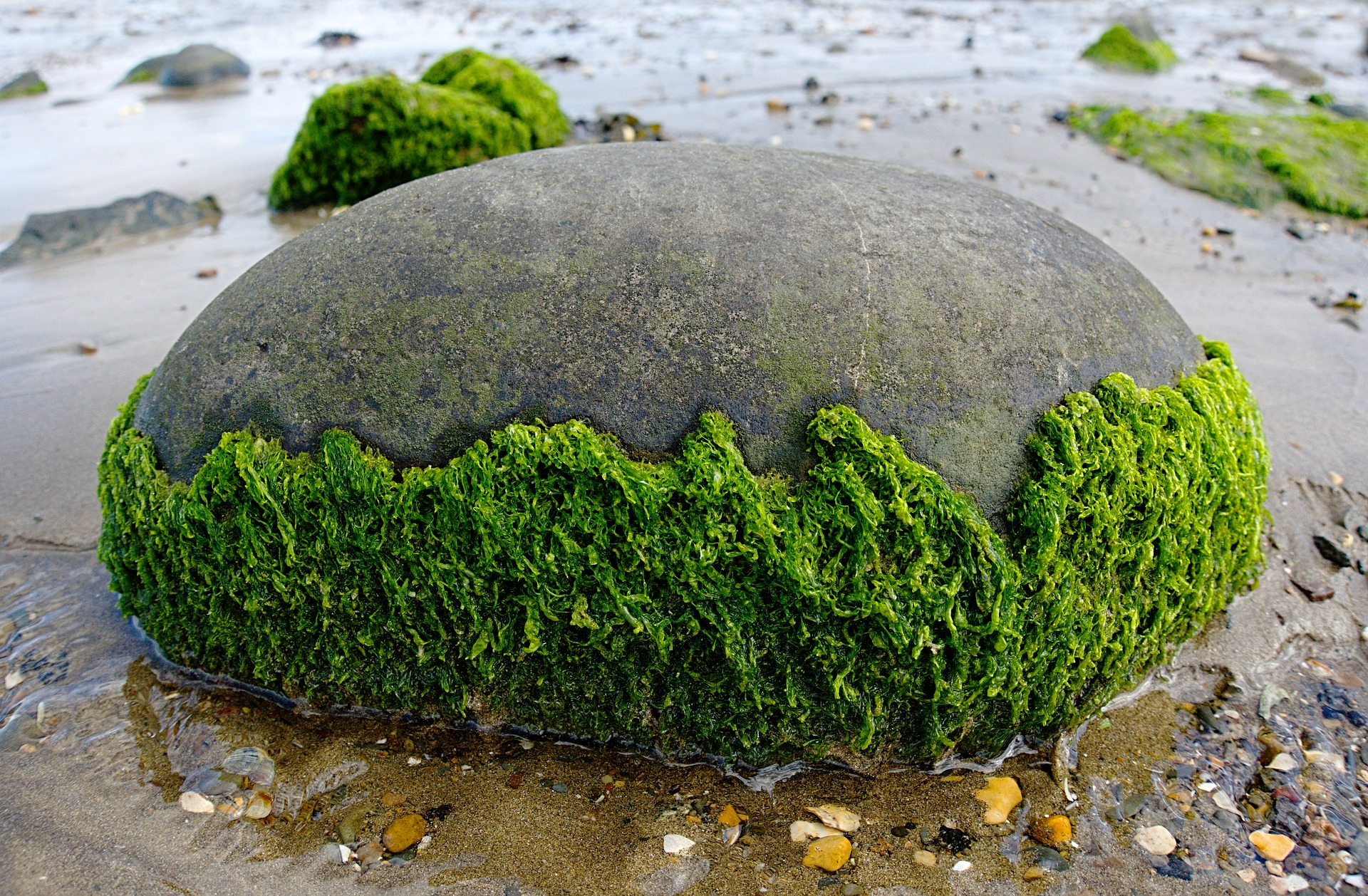 seaweed-2205570_1920.jpg