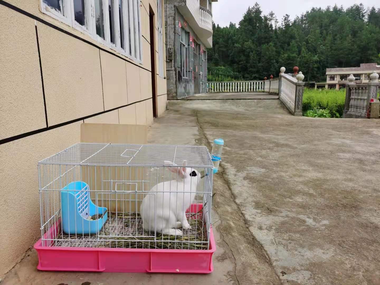 兔子-2.jpg