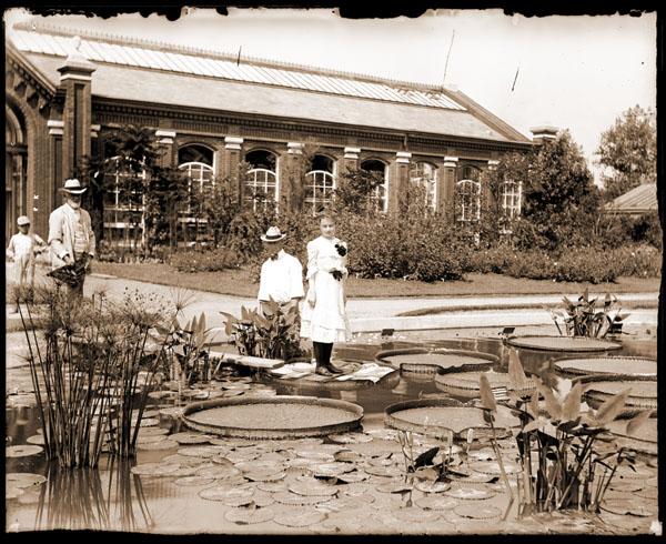 图7 右 密苏里植物园(1902).jpeg