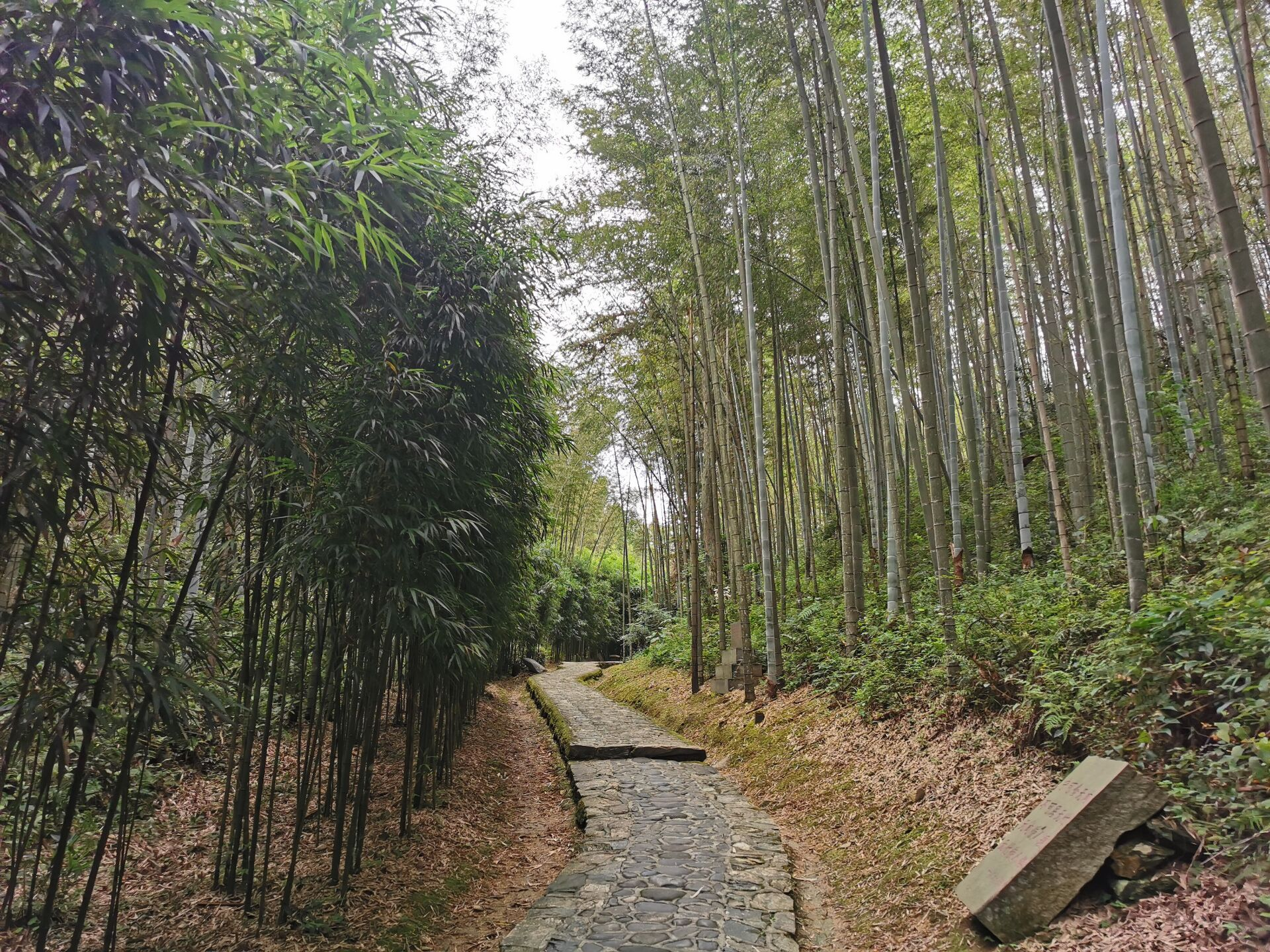 井冈山之百竹园12.jpg