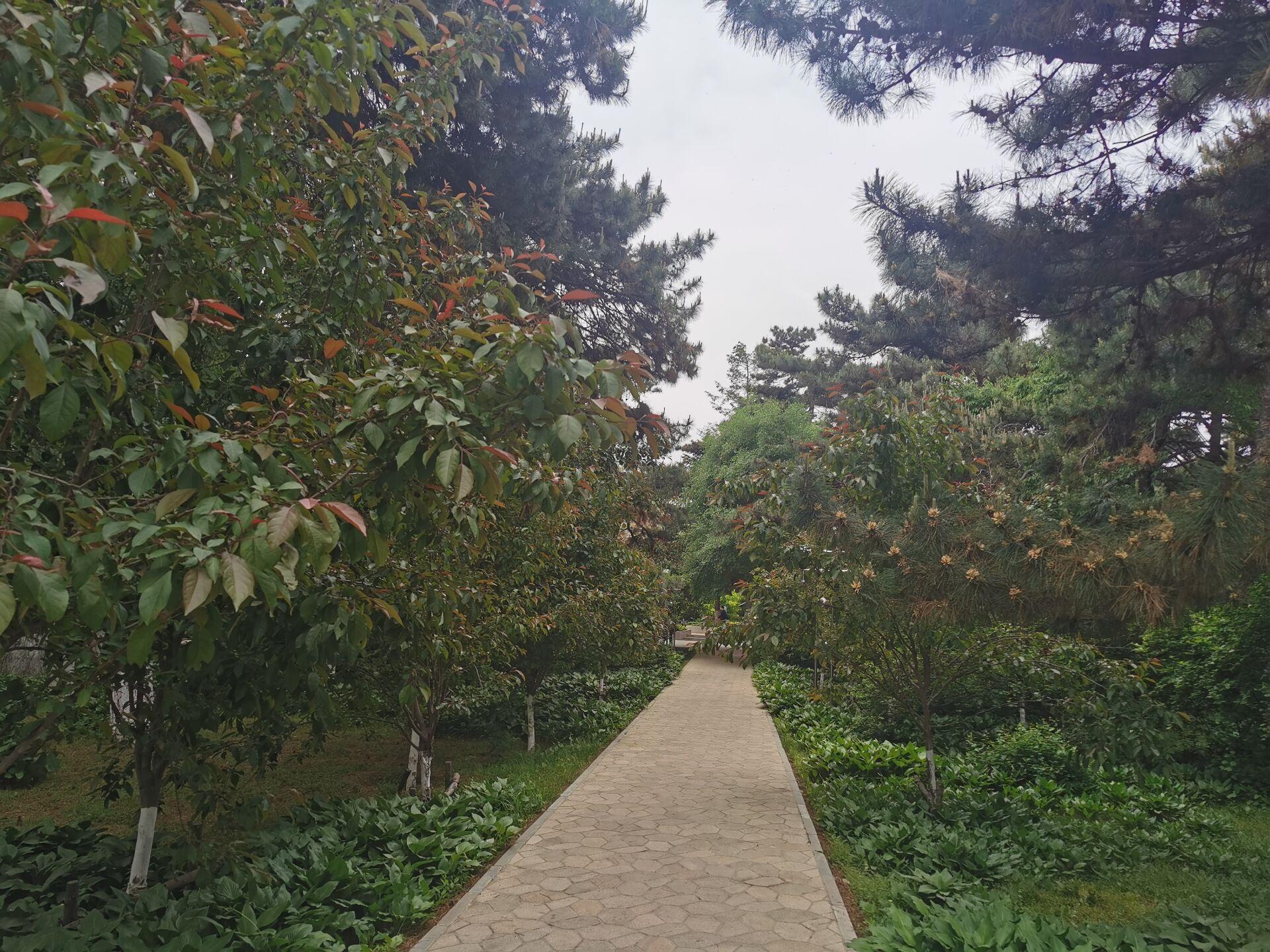 沈阳东北大学中心花园01.jpg