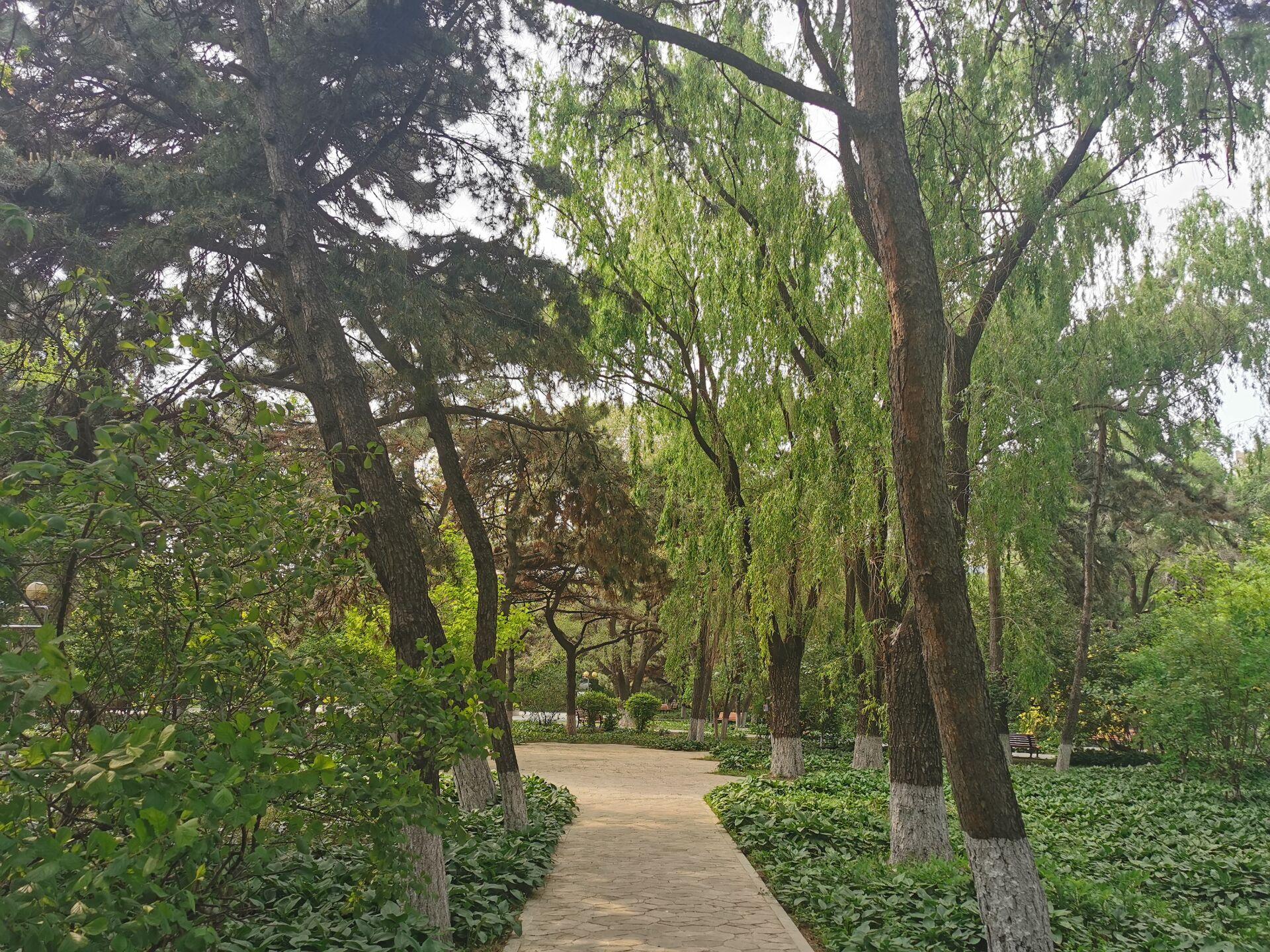 沈阳东北大学中心花园14.jpg
