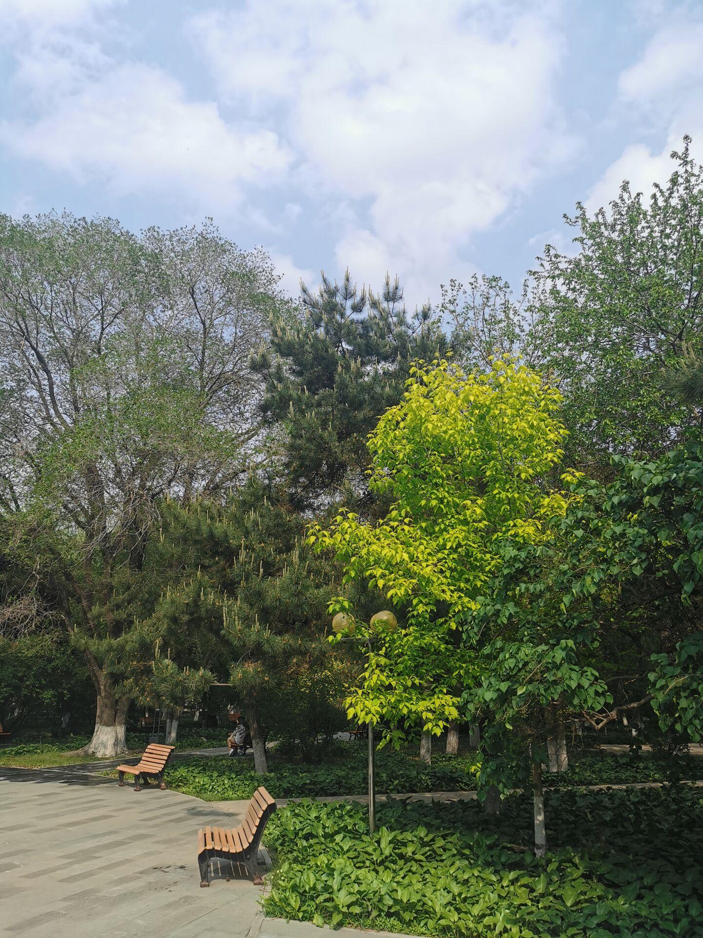 沈阳东北大学中心花园16.jpg