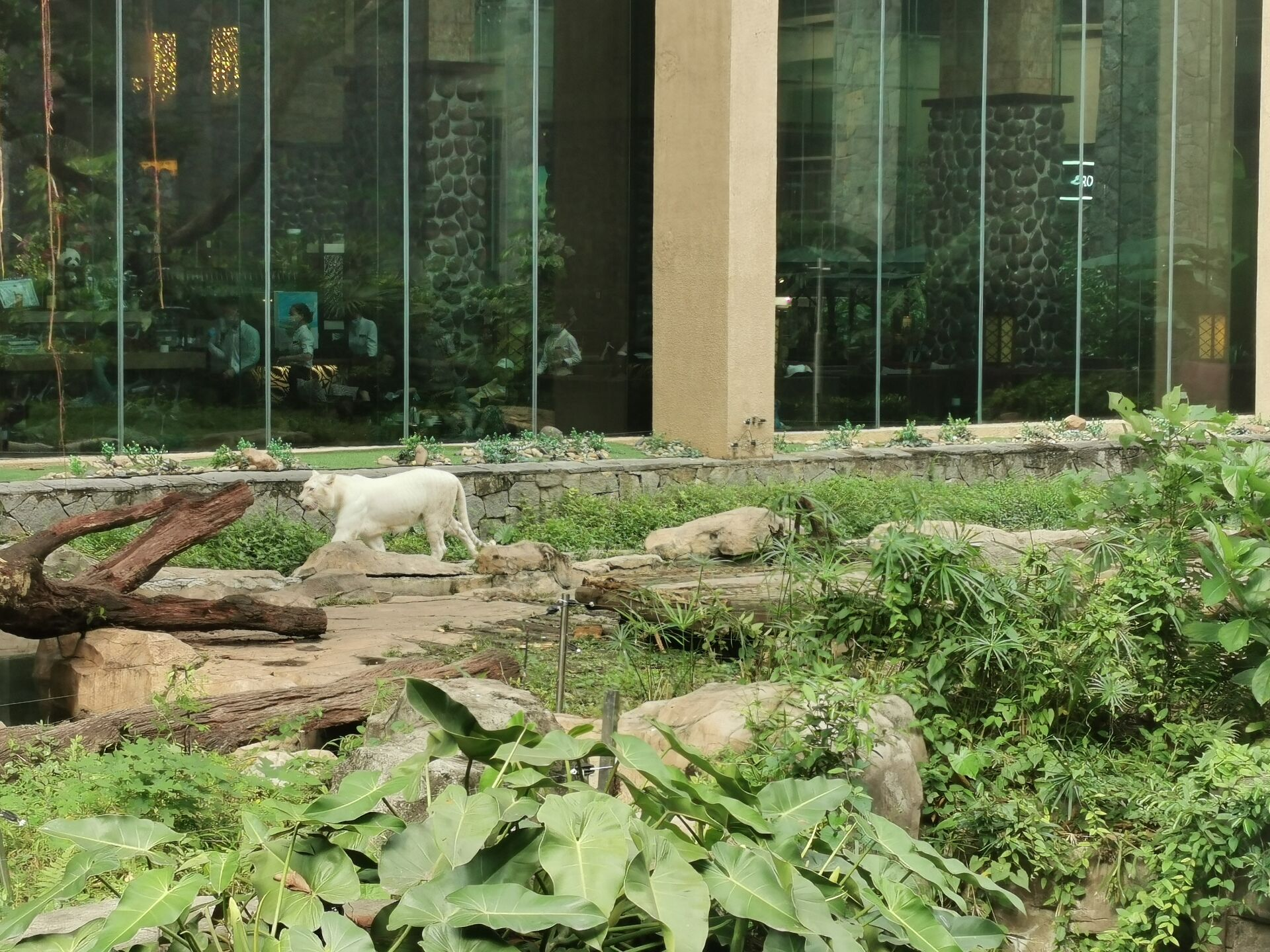 广州某宾馆的老虎14.jpg