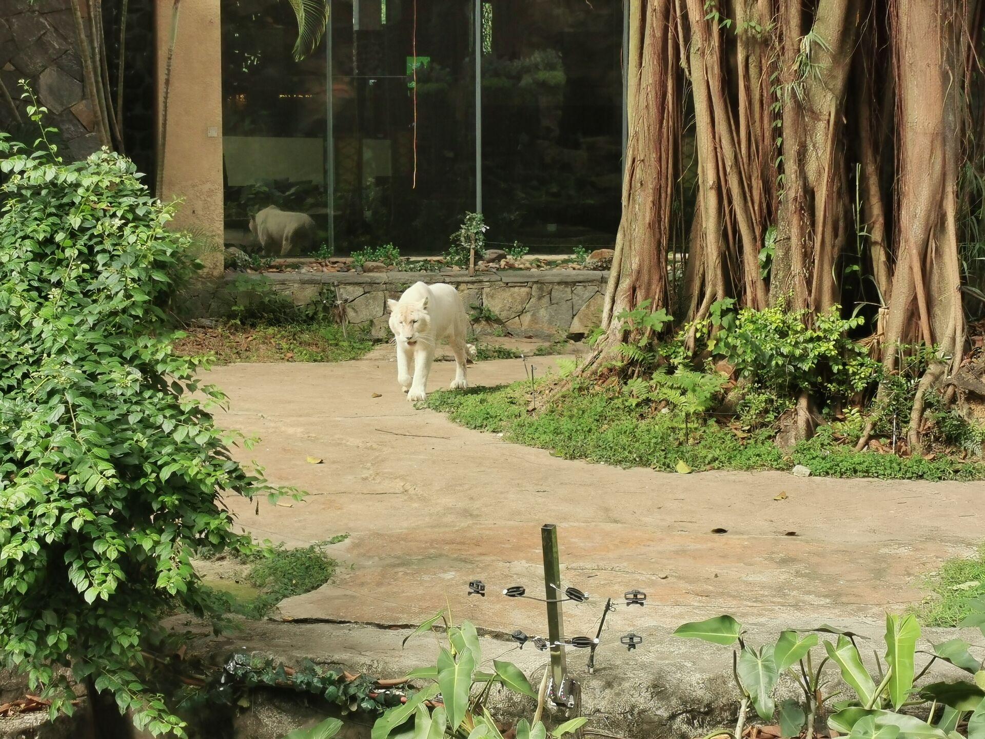 广州某宾馆的老虎16.jpg