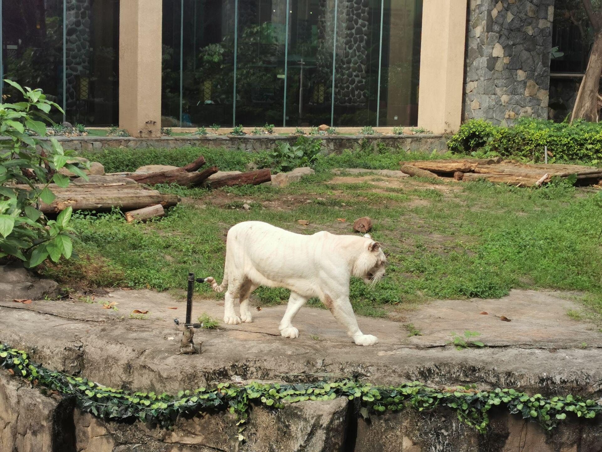 广州某宾馆的老虎18.jpg