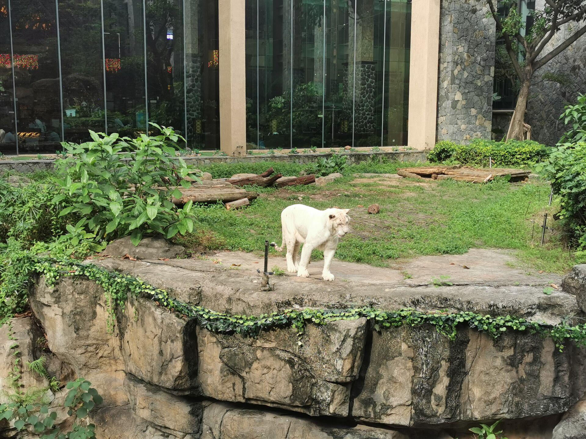 广州某宾馆的老虎19.jpg