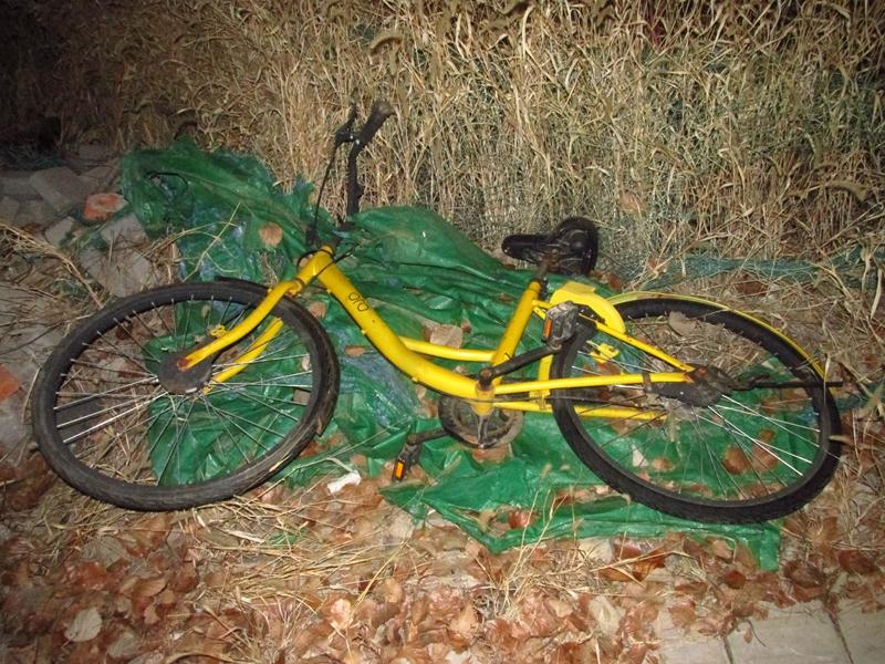 4辆被遗弃的OFO黄色自行车(2018秋,北洋园) 10 IMG_8690_副本.jpg