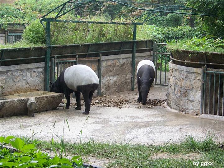 科学网—北京动物园