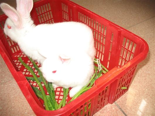 小兔乖乖,我家快快