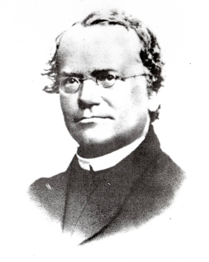 Gregor Mendel - Roses Biology B Website