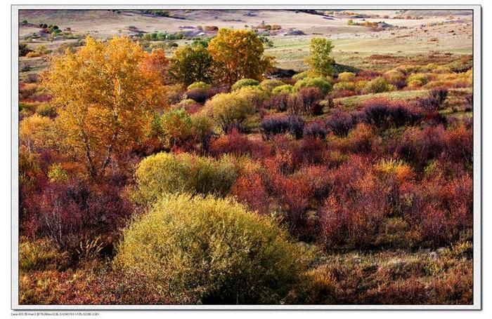 秋天到了,喜欢摄影的人最忙的时候也到了。 秋天是丰富多彩的季节,那金色、那红色、那..........令人陶醉。 秋天是收获的季节,山西的农民在收玉米、土豆、谷子。内蒙的牧民在收草,看着那肥美的牛羊露出了满意的笑容。 到了秋天我们单位的几个摄影爱好者几乎把所有的业余时间都去赏秋,我会陆续把这个季节的美景发到博客里,让南方的朋友看看北方的秋色,让没有时间出去赏秋的科学家也轻松一下。不知道能不能达到目的。 感谢各位欣赏!