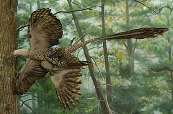 世界上最早的带毛恐龙化石在我国辽宁发现