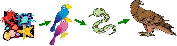 伦理的食物链:滨海蝮蛇→小型生物→蛇岛→雀鹰(漫画等)猛禽候鸟的图片