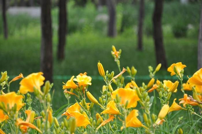 石家庄植物园的几朵花高清图片